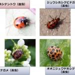 紛らわしい病害虫の例(プレスリリースより)
