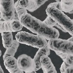 東大と東工大、大腸菌に潜む「マクスウェルのデーモン」の働きを解明