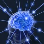 東北大ら、神経回路構築を制御する脂質を発見