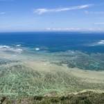 沖縄の海で新種発見、タツトゲカワ属2種-琉球大