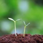 名古屋大学 植物免疫の活性酸素生成メカニズムを解明