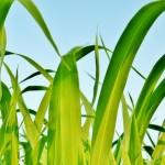 福島大学と太平洋セメント、農地再生で共同研究
