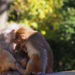 京都大学 霊長類の脳を光で操作