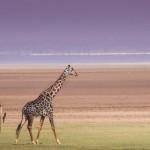 フィールドワークでタンザニアへ パネル写真展開催中 明星大学