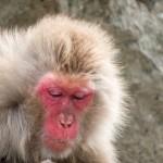 筑波大学など 音声チック症、モデル動物で再現