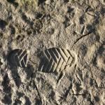 犯罪現場の土砂を解析し捜査に貢献、全国土砂データベース開発 東京理科大学