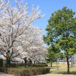 tokyofukushi_sakura