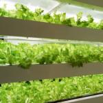 大阪府立大学、人工光型植物工場の共同研究へ