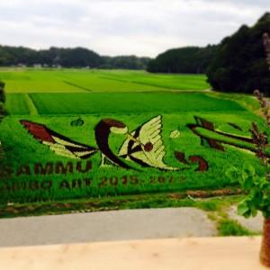 田んぼアート 2015年度の様子