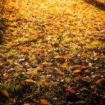 キャンパス内の落ち葉で作った堆肥を地域住民に頒布 千葉大学