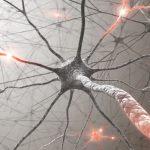 世界初、大麻の成分が脳の神経回路を破綻させることを証明 大阪大学