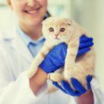 東京大学、ネコの腎不全の原因は血中タンパク質