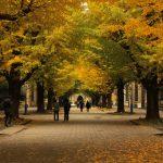 「大学ブランド力」ランキングを日経BPコンサルティングが発表