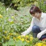 ガーデニングはうつ症状を低下させ、健康促進に効果あり 東京大学